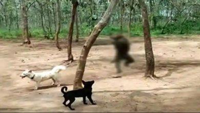 Photo of Viral Video : तेलंगाना में युवकों का दिखा अमानवीय चेहरा, खाने की तलाश में घर में घुसे बंदर को पेड़ से लटकाया
